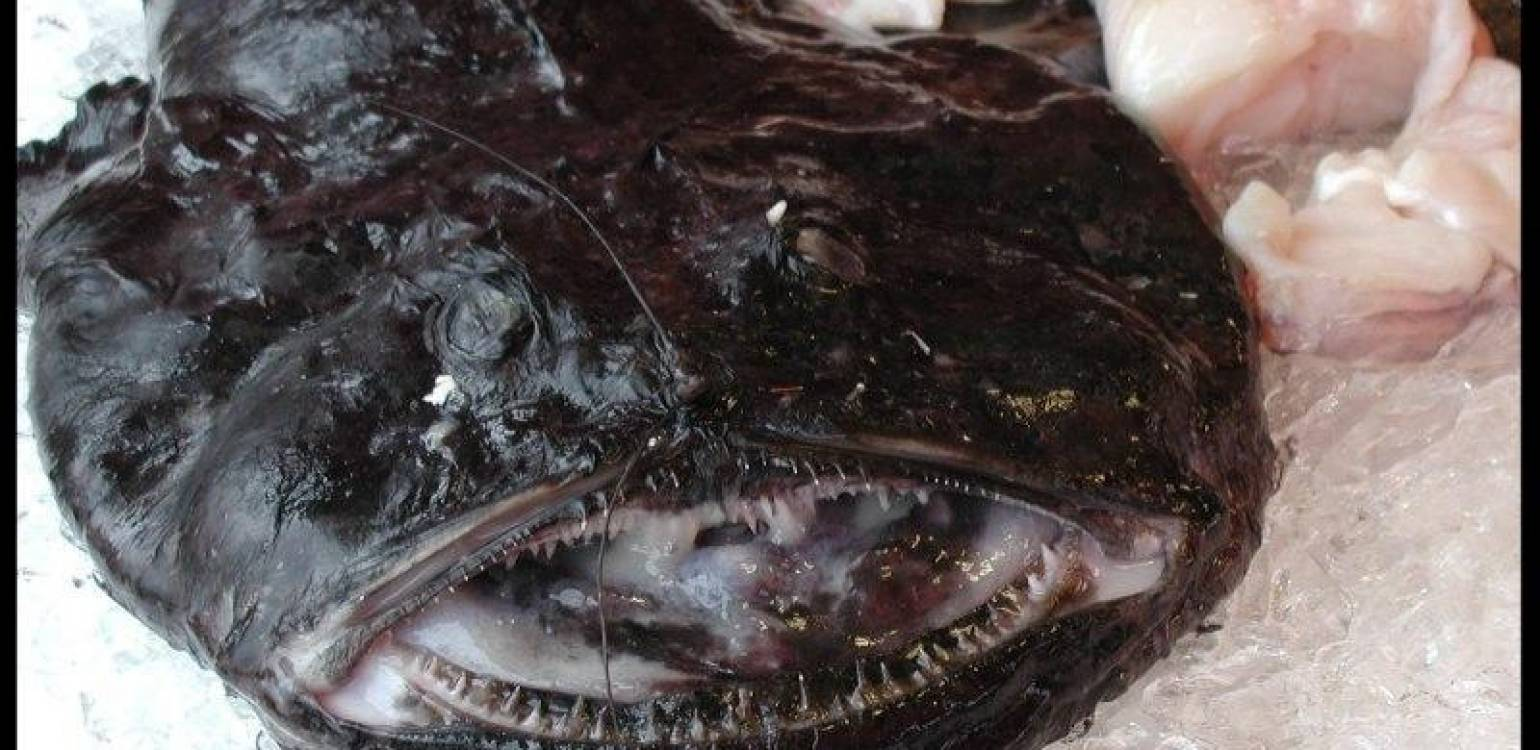 Obsession Confession – Monkfish